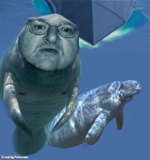 Funny Manatee Moore
