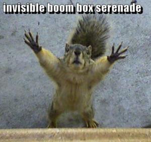 Funny Squirrel - Invisible Boom Box Serenade