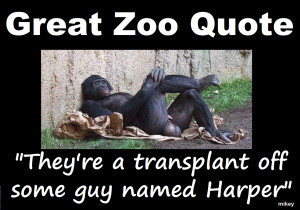Great Zoo Quote. To be in contempt of. Parliament you need these!