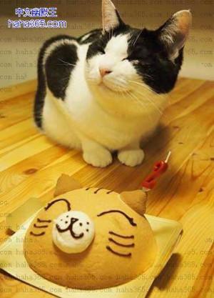 搞笑图片:猫咪,生日快乐!