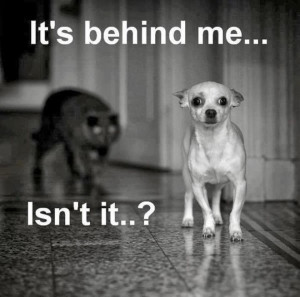 ... funny dogs and cats fighting,funny dogs and cats quotes,funny dogs at