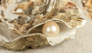 oyster-pearl-100903-02.jpg?1324345935