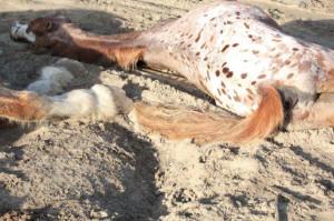 dead horse quote 2