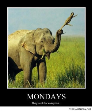 Funny monday pictures monday is gone, almost over