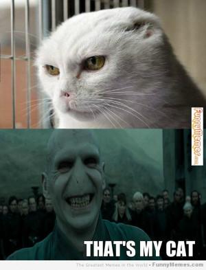 Cat memes – [Voldemort cat]