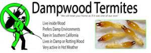 Drywood Termites Dampwood Termites Swarmers Subterranean Termites HD ...