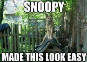 German shepherd #funny dog quotes: Germanshepherd, Funny Dogs, Funny ...