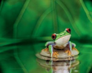 cute cute frog