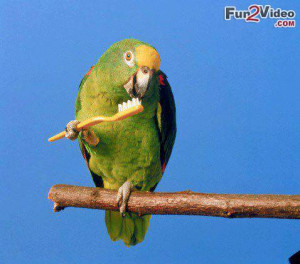 Parrot bird funny like a boss which is very hilarious and this funny ...