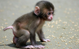 Funny Baby Monkey Pictures Gallery