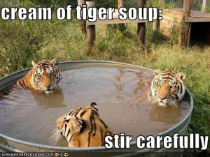 Funny Tigers in a Funny swimming Pool