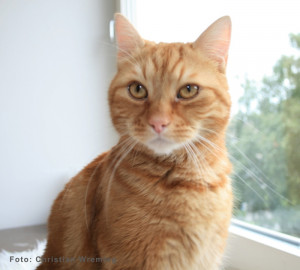 Related Pictures katt williams katt box