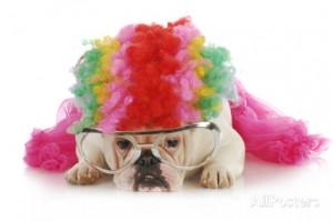 Dog Jokeroo Food Fail Dressed