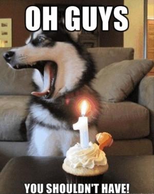 dog birthday meme