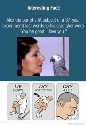 Lie Down. Try Not To Cry. Cry A Lot. An Emotional Meme Collection
