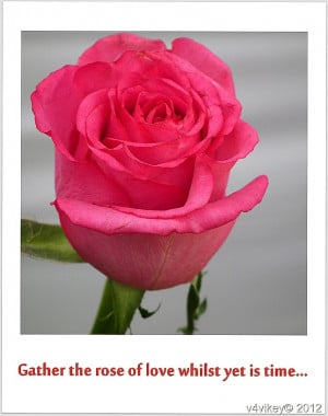 ... quotes on flower quotes on rose quotes flower wallpaper rose pink rose