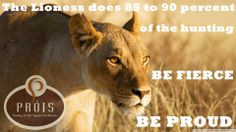 lioness more lionesses quotes beautiful living king of beasts panthera ...