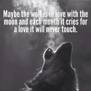 why the wolf is the loneliest one even they know its better to wait ...