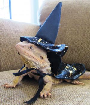 Boo as a Wizard Lizard...