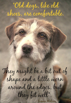 Old dog quote.Old dogs are like old shoes.