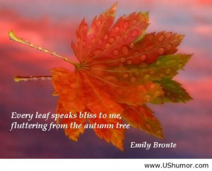 Cute Autumn Quotes Funny pictures, funny jokes,