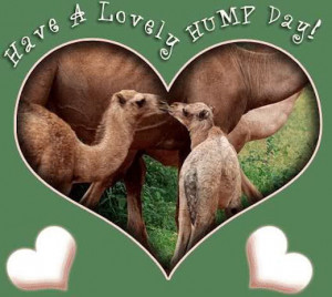165741-Have-A-Lovely-Hump-Day.jpg