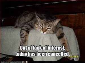 funny pictures cat cancels today