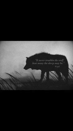 Wolf Quotes》Virgil