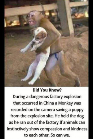 Incredible Picture Of Monkey Saving A Dog During Factory Explosion