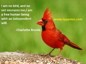 bird quotes 1
