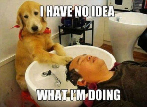 The Dog Spa - Return to Funny Animal Pictures Home Page