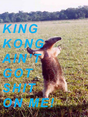 File Name : king-kong-aint-got-shit-on-me-animal-quote.jpg Resolution ...