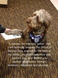 service dog oath vote for gander on the hero dogs site