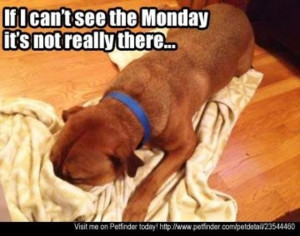 Happy Monday #doglovers #dogs