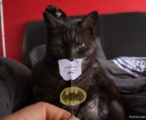 batman-cat-costume