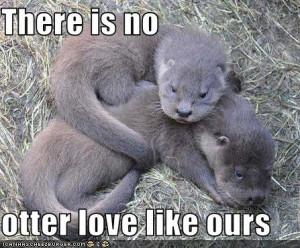 ... was thinking i wanna find my otter half, but soooo cute