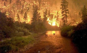 taken in 2000 in Montana at the Bitterroot Forest Fire by a Forest ...