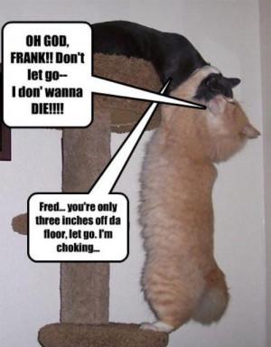 funny-animals-funny-jokes-18910953-500-641.jpg