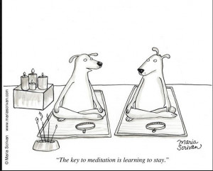 ... Yoga Humor, Funny Cartoons, Funny Stuff, Meditation, Learning, Funny