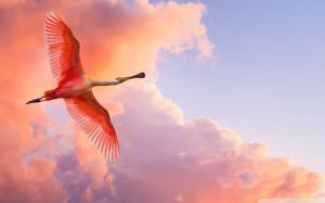 Летящий розовый фламинго фото, обои ...