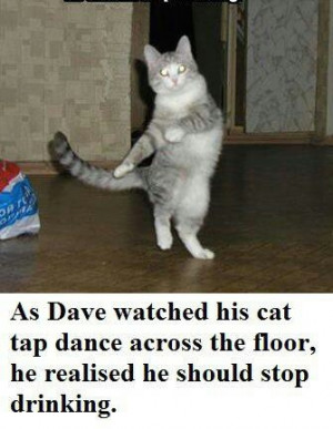 Taps Dance, Funny Pictures, Funny Cat, Line Dance, Funny Stuff, Funny ...