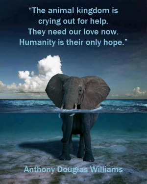 The animal kingdom is crying out for help they need our love now ...