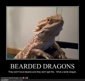 Bearded Dragons | LOLBRARY.COM