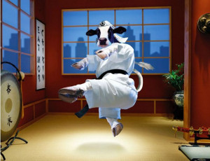 Funny Cow New Photos/Images 2011