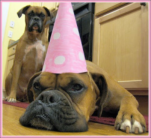 happy birthday funny cards funny dogs and cats