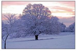 Robert Frost Winter Poem