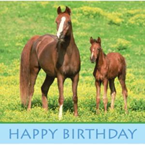 happy birthday horse pictures