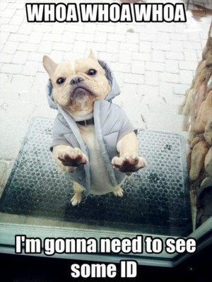 funny dog pics funny pics of anything with captons for