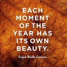Quotes About Appreciating Beauty Of Nature ~ Nature Appreciation on ...