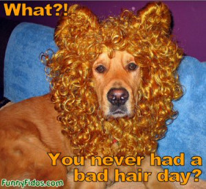 funny-dog-you-never-had-bad-hair-day